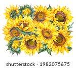 watercolor sunflowers flowers...   Shutterstock . vector #1982075675