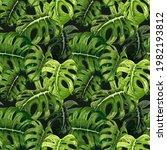 monstera leaves  carved  green  ... | Shutterstock .eps vector #1982193812