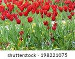 tulips | Shutterstock . vector #198221075