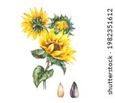watercolor sunflowers summer...   Shutterstock . vector #1982351612