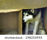 frightened stray dog | Shutterstock . vector #198253955