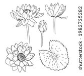 water lily. vector sketch of... | Shutterstock .eps vector #1982735282