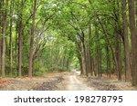 Beautiful Path In The Dense...