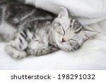 Stock photo nap of the kitten 198291032