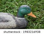 Duck Decoy In A Yard