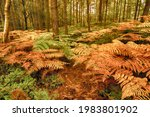 Colorful Brackens In The Forest ...