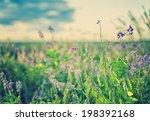 vintage photo of wild flower in ...   Shutterstock . vector #198392168