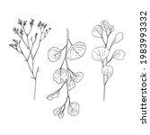 eucalyptus vector sketch of... | Shutterstock .eps vector #1983993332