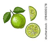 lime. vector drawing of food.... | Shutterstock .eps vector #1984000178