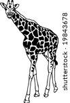vector   contour giraffe...   Shutterstock .eps vector #19843678