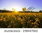 blooming yellow flowers | Shutterstock . vector #198447002