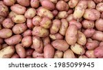 Young Ripe Potatoes With A Thin ...
