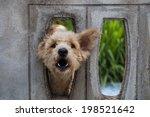 Dog   Behind The Walls.