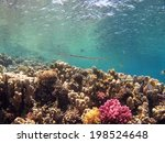 shallow and beautiful coral ... | Shutterstock . vector #198524648
