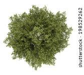 top view of poplar tree...   Shutterstock . vector #198529262