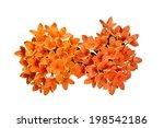 Beautiful Of Orange Ixora  ...