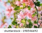 Paper Flowers Or Bougainvillea...