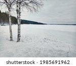 two birches at frozen skellefte ... | Shutterstock . vector #1985691962