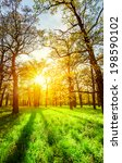 morning sun beams in the spring ... | Shutterstock . vector #198590102