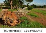 A Huge Old Dead Eucalyptus Tree ...