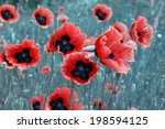 Vibrant Red Poppies In Natural...