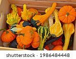 Box Of Gourds And Pumpkins