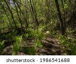 Dirt Hiking Trail Winding...