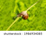 Little Snail Sitting On The...