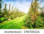 apple orchard at sunny summer... | Shutterstock . vector #198700226