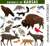 Vector Set   Animals Of Kansas ...
