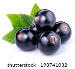 black currants | Shutterstock . vector #198741032