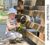 Kid Girl Feeding Sheep On A Farm