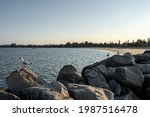 Seagulls On The Rocky Path By...