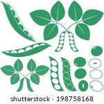 soybean bean. isolated soybean... | Shutterstock .eps vector #198758168