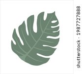 monstera palm leaf  isolated... | Shutterstock .eps vector #1987727888