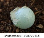 Broken Eggshell On The Forest...