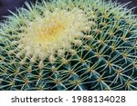 Cactus Plant Large Frame ....