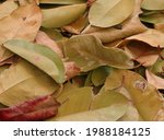 The Dry Leaves Covering The...