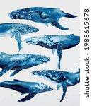 Blue Whales Ornament   Wild...