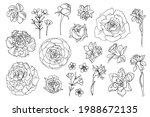 flowers line drawn on a white... | Shutterstock .eps vector #1988672135