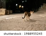 Stray Cat Living In The Streets
