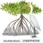 Great Egret With Mangrove Tree...