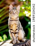 Sweet Tabby Cat Sitting On A...