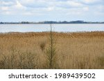 View of vast yet shallow lake seen on a cloudy yet warm summer day with the cost of the reservoir being fulll of reeds and other flors and some dense forest or moor visible on the other bank in Poland