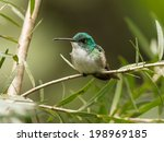 a small turquoise and white...   Shutterstock . vector #198969185