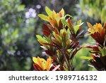 green leaf in tree garden    Shutterstock . vector #1989716132