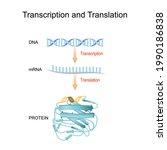 dna  rna  mrna and protein... | Shutterstock .eps vector #1990186838