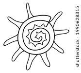 sunburst star turban shell... | Shutterstock .eps vector #1990628315