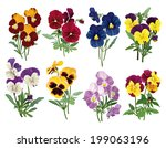 bouquet of multicolored pansies, set of forget-me-nots