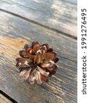 A Ladybug Crawls On A Pine Cone ...